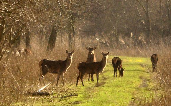 Oproep aan provincie Flevoland: Geen jacht in Oostvaardersplassen