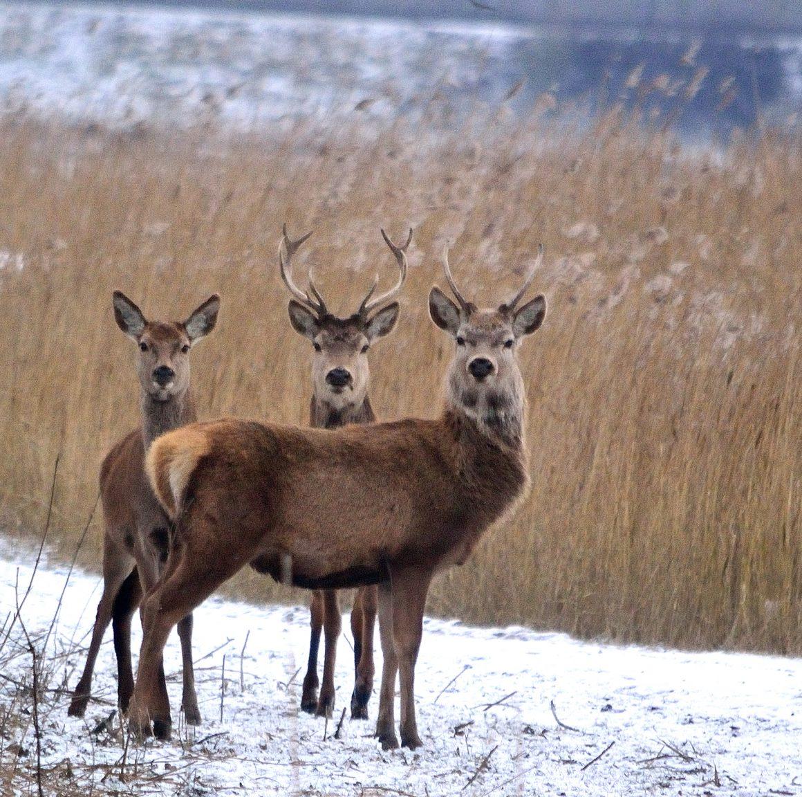 Persbericht: Dier- en natuurorganisaties dringen aan op verbinding OVP met Horsterwold