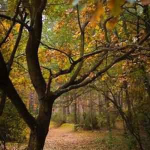 Oproep voor ander en duurzamer bosbeleid