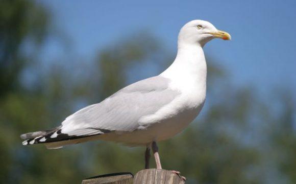 Fauna4Life doet aangifte tegen illegaal verstoren meeuwen in Rotterdamse haven