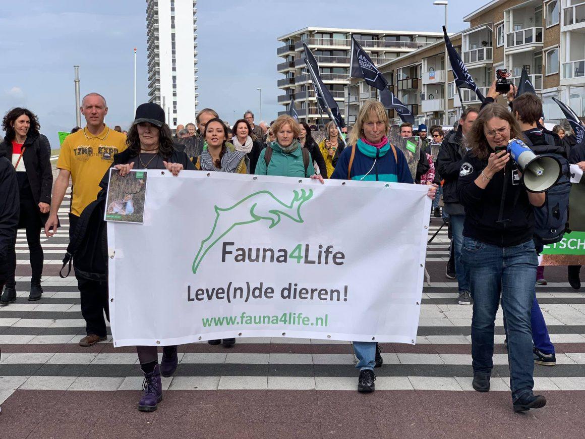 Meer damherten na afschot in Amsterdamse Waterleidingduinen