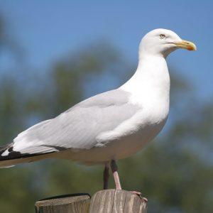 15 diersoorten van afschotlijst Groningen Airport afgehaald
