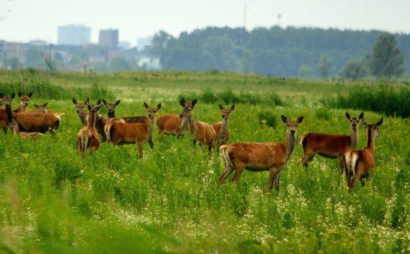 Raad van State keurt afbraak natuurgebied OVP goed