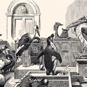 Juridische acties zijn hard nodig – Geef de dieren een stem!